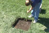 Remove Sod and Dig to Correct Depth
