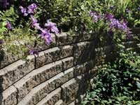 Top retaining wall with plants